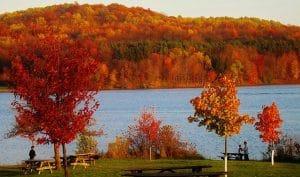 trees during autumn in Pennsylvania