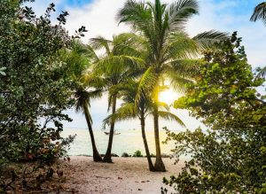 large coconut palm trees and shrubbery on a beach shore